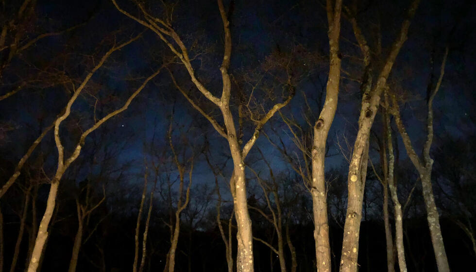 The night sky and Usdan tree tops.