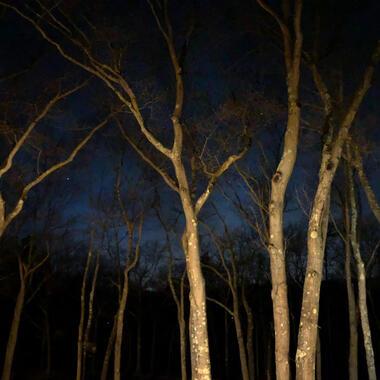 The night sky and Usdan tree tops.
